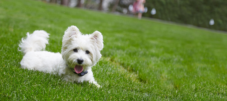Customer Testimonials - You'll Love Us Too   Stateline DogWatch®