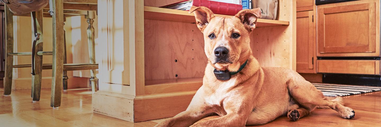 Indoor Boundaries and Pet Fences   Stateline DogWatch®